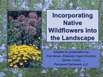 Landscaping with Florida Wildflowers - Pampered Gardeners