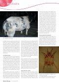 La gale, prévenir vaut mieux que guérir! - AWE - Page 4