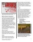Riparian Ecosystems.pdf - UrbanEcology.ca - Page 2