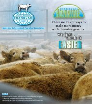 Charolais Advantage Brochure (PDF) - American International ...