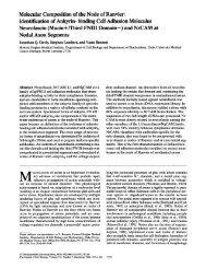 Identification of Ankyrin- binding Cell Adhesion Molecules Neurofascin