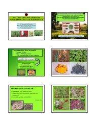 Tanaman Obat untuk Industri - Biology East Borneo