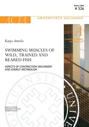 Swimming muscles of wild, trained and reared fish Aspects of - Oulun