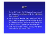 • Il virus dell'epatite E (HEV) causa l'epatite nonA non B trasmessa ...