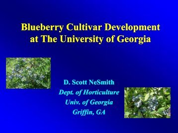 Blueberry Cultivar Development at The University of Georgia