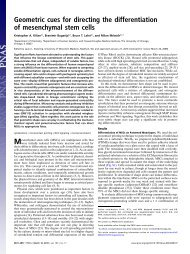 Geometric cues for directing the differentiation of mesenchymal stem ...