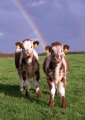 April 2012 - Longhorn Cattle Society - Page 4