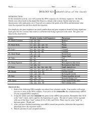 Snorks Protein Synthesis.pdf - nnhsbergbio