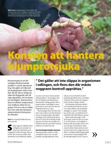Konsten att hantera klumprotsjuka - Svensk Raps
