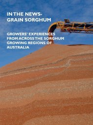 IN THE NEWST GRAIN SORGHUM - Directrouter.com