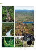 Generell hänsyn och naturvärdesindikatorer - SLU - Page 5