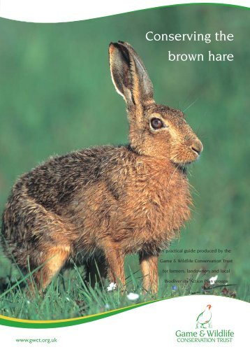 Conserving-the-Brown-Hare