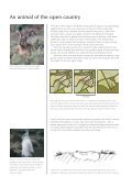 Conserving-the-Brown-Hare - Page 2