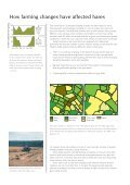Conserving-the-Brown-Hare - Page 5