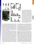 Granulocyte-colony stimulating factor promotes lung metastasis ... - Page 2