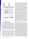 Granulocyte-colony stimulating factor promotes lung metastasis ... - Page 5