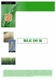 tableau comparatif blé dur 07 - Momont