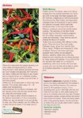 Download the Planting and growing guide for Chillies - Scotsdales ... - Page 2