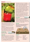 Download the Planting and growing guide for Chillies - Scotsdales ... - Page 4