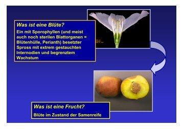 Was ist eine Blüte? Was ist eine Frucht?