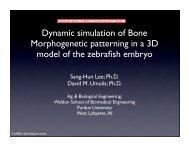 Dynamic simulation of Bone Morphogenetic ... - COMSOL.com