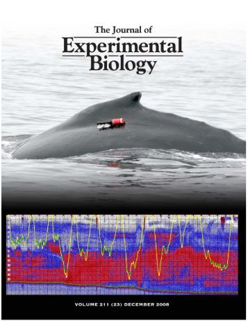 Foraging behavior of humpback whales - Cascadia Research ...