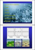 Popolazione - ZyXEL NSA210 - Page 3