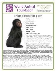 SPIDER MONKEY FACT SHEET - World Animal Foundation