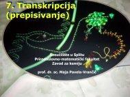 7. Transkripcija