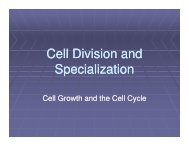 Cell Division and Specialization