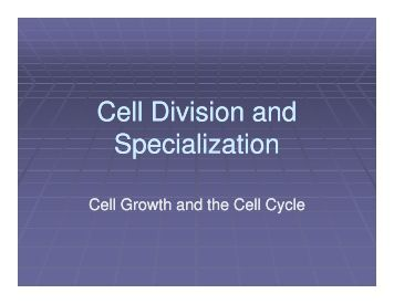 cell-division-and-specialization.jpg?quality=80
