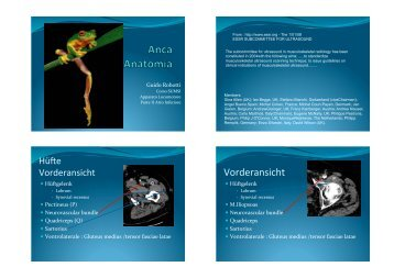 Anatomia Anca - L'Eco della SUMSI