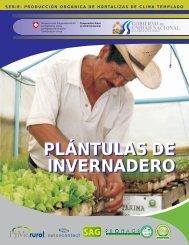 Plantulas de Invernadero - SITRural