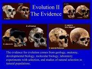 Evidence for Evolution.pdf