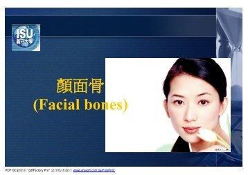 顏面骨(Facial bones)