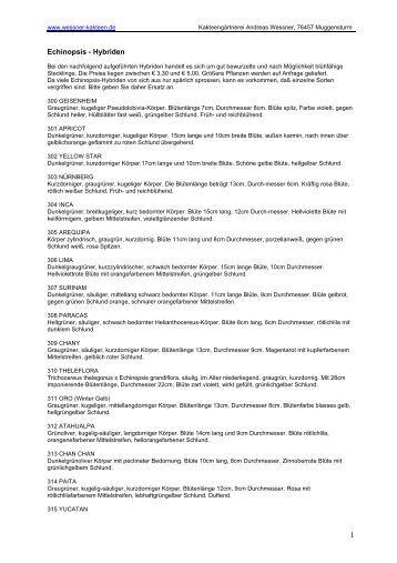 Echinopsis - Hybriden - Andreas Wessner Kakteen