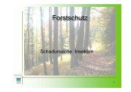 Forstschutz - Insekten - BFW
