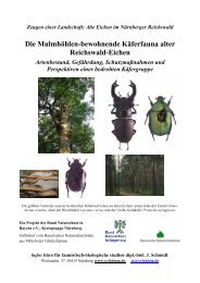 Die Mulmhöhlen-bewohnende Käferfauna alter Reichswald-Eichen