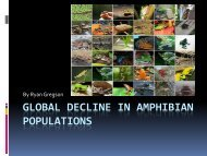 GLOBAL DECLINE IN AMPHIBIAN POPULATIONS