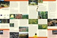 Rund um das Horbacher Moor - Hotzenwald LIFE
