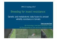 Breeding for insect resistance: