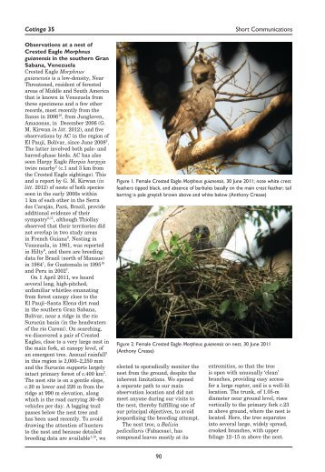 Observations at a nest of Crested Eagle Morphnus guianensis in the ...