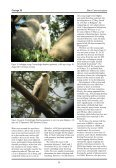 Observations at a nest of Crested Eagle Morphnus guianensis in the ... - Page 2