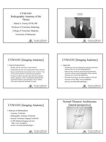 Cvm 6101 Imaging Anatomy University Of Minnesota