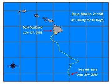 Blue Marlin 21158 - Kona Tournaments
