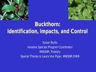 Buckthorn: Identification, Impacts, and Control