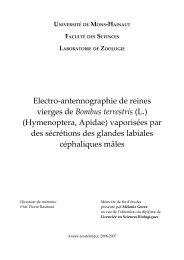 Electro-antennographie de reines vierges de Bombus terrestris (L ...