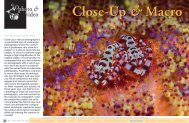 Close-Up & Macro | X-Ray Magazine | Issue 46 - Jan/Feb 2012