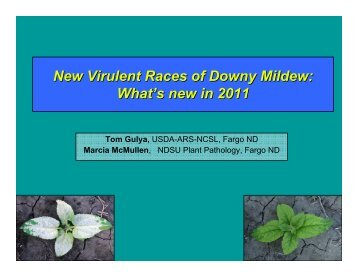 New Virulent Races of Downy Mildew: What's new in 2011