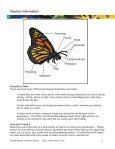 Butterflies and Moths - PedagoNet - Page 5